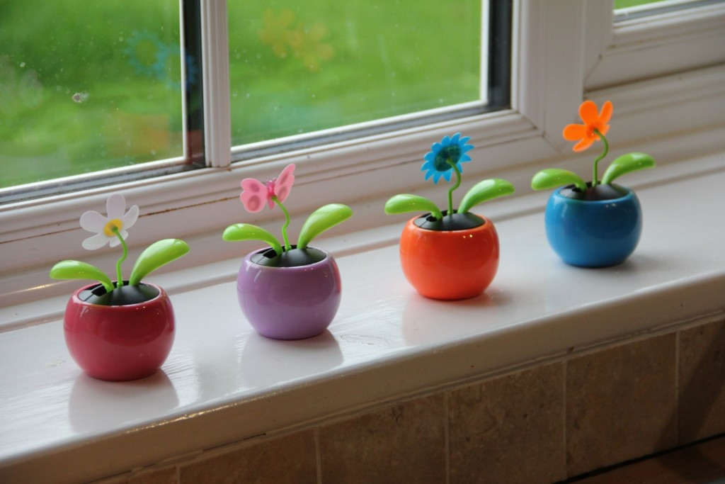 """Was die Sonne angeht, sind die Engländer optimistisch. """"Bepflanzung"""" des Küchenfensters im B&B mit eifrig wedelnden Solarblumen."""