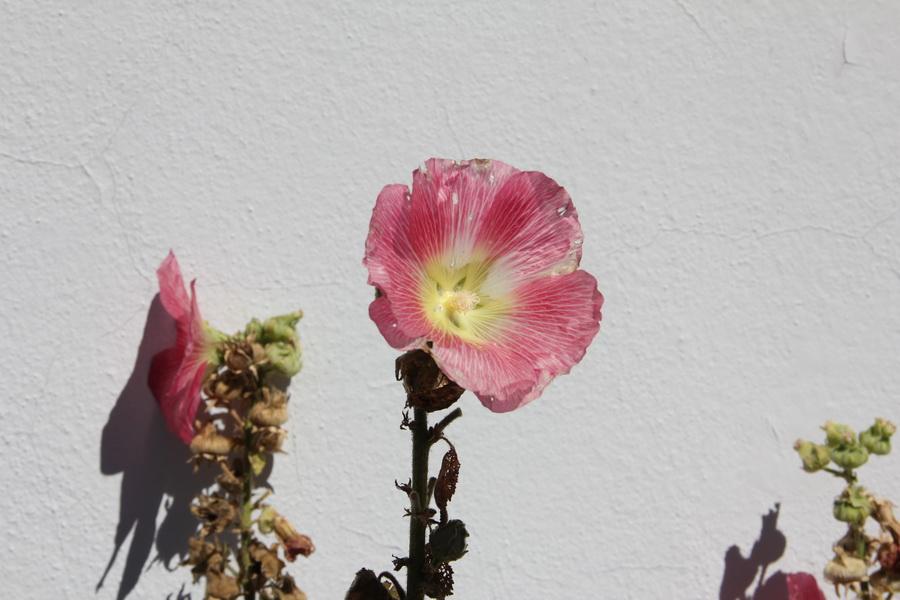 Lasst Blumen sprechen. Gut in Schuss ist die Botanik rund um die Werkstatt. Leider muss alles raus zum Wändetrockenlegen. Irgendwann.